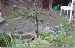 Winter Tree DSCN0070